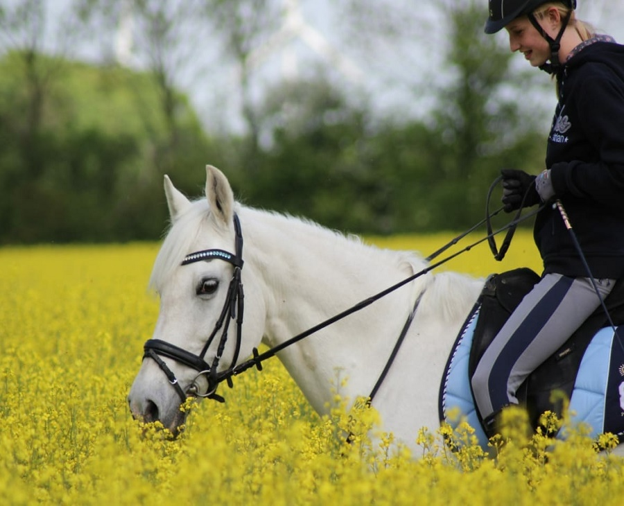 Glam Up Your Riding Game with Swarovski Crystals